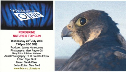 Peregrine - Nature's Top Gun
